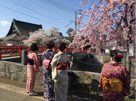 桜の季節の飛騨古川で着物を着てお散歩